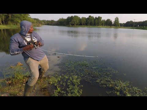 Fishing a 60-yr-old abandoned pond… searching for monsters.