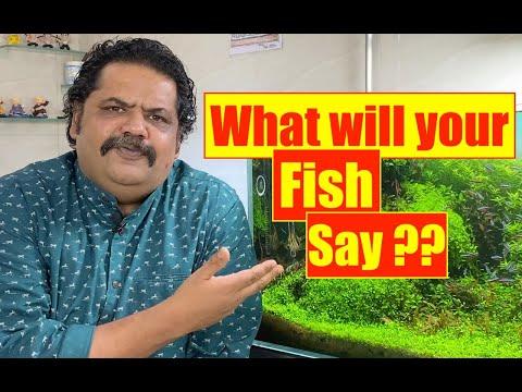 What will your Fish Say ?? All Aquarium Fish | Nature Aquarium | Mayur Dev's Tips | Fish Keeping  4K