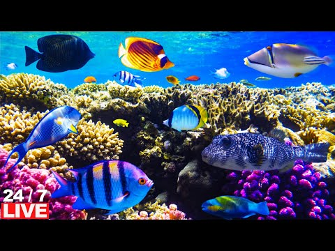 CORAL REEF AQUARIUM  LIVE 🔴24/7 live fish tank cleaners