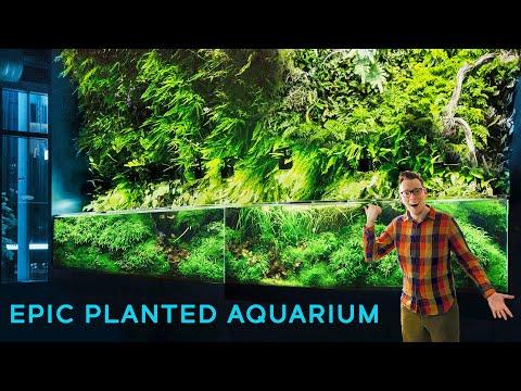 17-Foot Aquarium with Massive Living Wall — EPIC AQUASCAPE