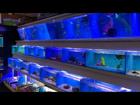 Aquarium and Reef Center Fish Store Tour! What Do They Have to Offer?
