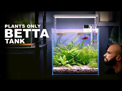 Aquascape Tutorial: BETTA FISH CUBE AQUARIUM Plants Only (How To: Step By Step Planted Tank Guide)