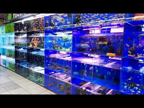 Aakar Aquarium Fish Shop Borivali | Aquarium Fish Section | Aquarium Fish New Stock Update | Part 2