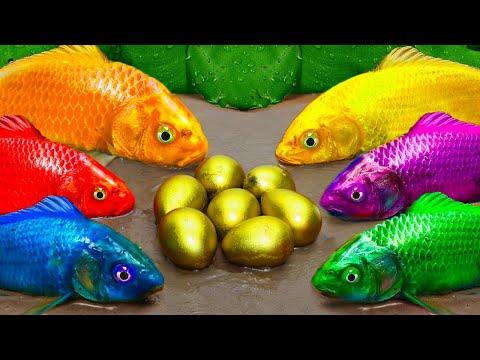 Stop Motion ASMR | Colorful Koi Fish Carp Underground Cooking | Catfish chasing Colorful Koi