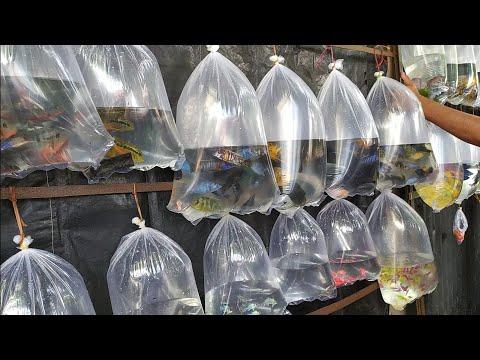 RECENT AQUARIUM FISH PRICE UPDATE | GALIFF STREET FISH MARKET KOLKATA| CHEAP PRICE |VISIT 19 SEP2021