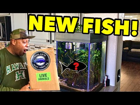 NEW AQUARIUM FISH IMPORTED FROM TAIWAN!y