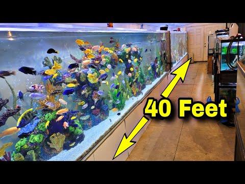 Massive Wall Of Aquariums – Bellagio Tank Updates and More
