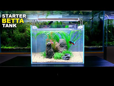 Aquascape Tutorial: ULTIMATE BETTA Nano Tank For Beginners (How To No co2 Planted Tank Step by Step)
