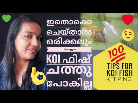 How to Care Koi Fishes|Koi Carp Caring Malayalam|Koi Fish|Koi Fish Tank Setup|Koi Fish Full Details|