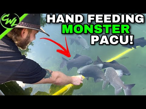 MONSTER FISH POND + HIGHLY VENOMOUS SNAKES!!!
