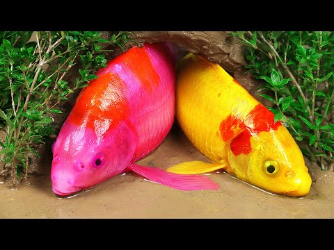 Stop Motion ASMR | True Love Colorful Koi Fish Trap Eel In The Mud Primitive Cooking Make Brain Soup