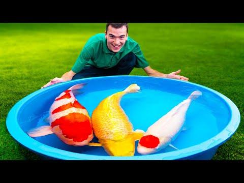 Do Koi Fish Make Good Pets? (The Truth)