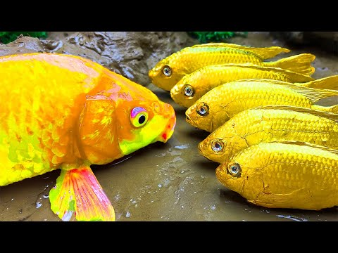 Amazing Colorful Fish | Catching In Mud Water Pond: catfish, turtle, crab Stop Motion Cooking ASMR