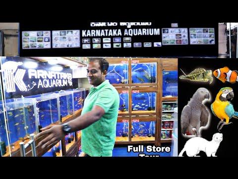 Aquarium fish prices – Exotic Fish – karnataka Aquarium Full Store Tour