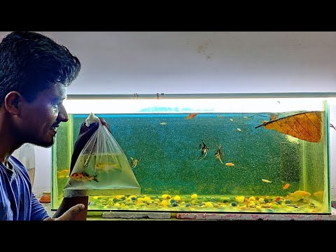 Fish Tank -க்கு Koi Carp Fish வாங்கியாச்சு! 🐠 | Vijay Vlogs