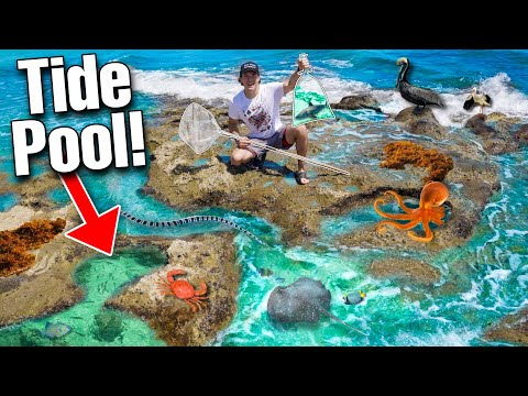 FINDING FISH IN BEACH TIDE POOL! (sharks, manatees, aquarium fish!)