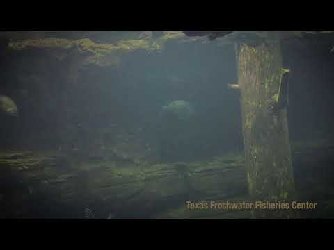 Texas Parks and Wildlife Live Lofi Chill Relaxing Aquarium for Sleep or Study