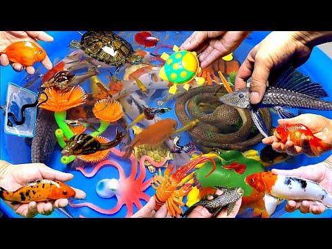 Colorful Cute Water Animals, Goldfish, Koi Fish, Snake, Turtle, Guppies,Pleco,Snail,Crab (Shark)