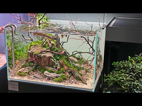 STUNNING PLANTED TANK DISPLAYS IN HUGE AQUASCAPING STORE
