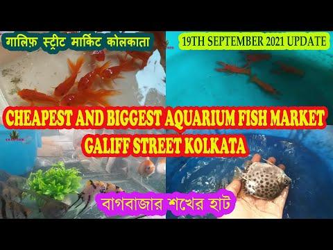 GALIFF STREET AQUARIUM FISH MARKET KOLKATA   RECENT AQUARIUM FISH PRICE   19TH SEPTEMBER 2021 VISIT