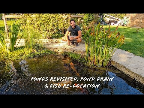 Ponds revisited; pond drain & fish re-location '