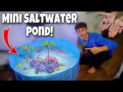 DIY *MINI* EXOTIC Saltwater POND With FISH and INVERTEBRATES!!