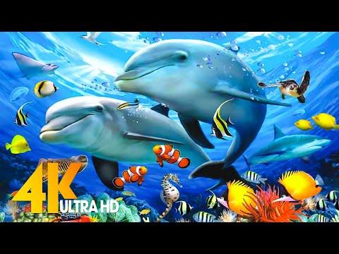 Aquarium 4K VIDEO (ULTRA HD) –  Beautiful Coral Reef Fish – Sleep Relaxing Meditation Music
