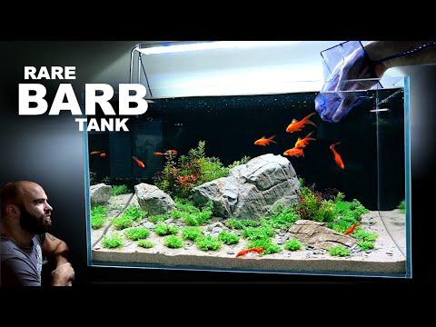 The Rare Barb Aquarium: Beautiful Aquascape Tutorial w/ Rocks & Plants Only