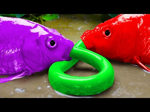 Pink Catfish Hunting Colorful Koi Fish – Fishing in Mud | Stop Motion Cooking Primitive Experiment