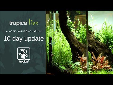Tropica Live | Classic nature aquarium | 10 day update