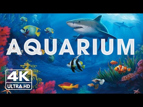 The Best 4K Aquarium for Relaxation II 🐠 Relaxing Oceanscapes – Sleep Meditation 4K UHD Screensaver