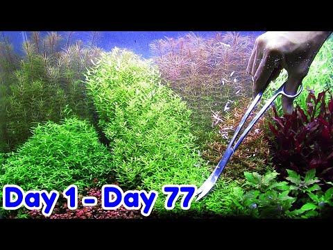 Dutchstyle 2 | 60cm Aquascape Dutchstyle – Step by Step Tutorial