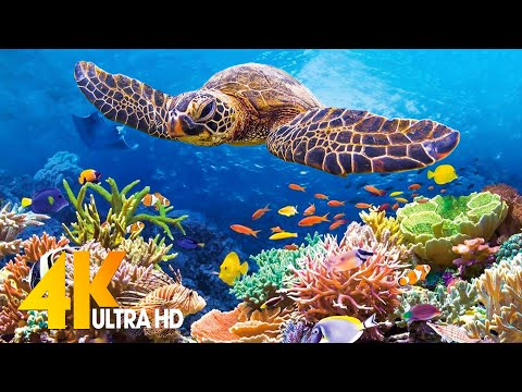 [NEW] 11 HRS of 4K Turtle Paradise – Undersea Nature Relaxation Film + Sleep Relax Meditation Music