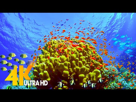 [NEW] 11HRS Stunning 4K Underwater Wonders + Relaxing Music | Coral Reefs & Colorful Sea Life