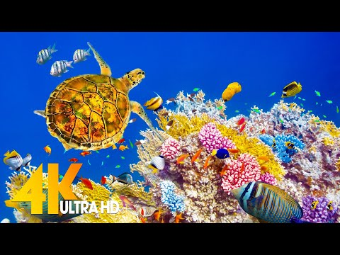 Aquarium 4K VIDEO (ULTRA HD) – Sea Animals With Relaxing Music – Rare & Colorful Sea Life Video