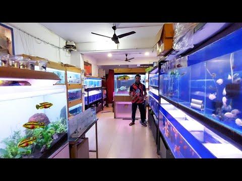 New Monster And Rare Planted Aquarium Fish Stock At Austin Aquatic Aquarium Store
