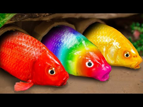 Stop Motion ASMR | Colorful Koi Fish organization dancing |Catching Strange Catfish | Mud Cooking
